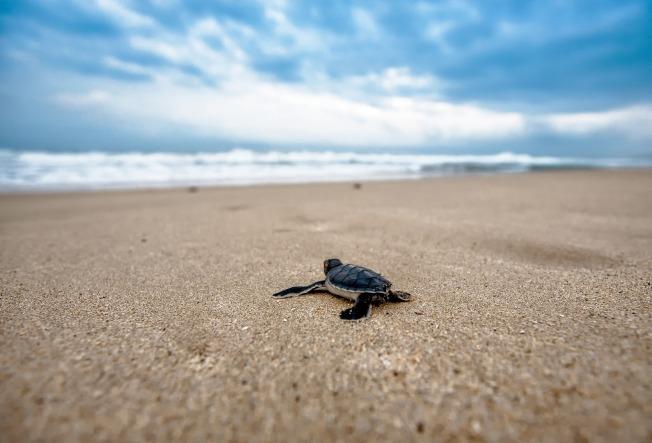 turtle-2201433_1920